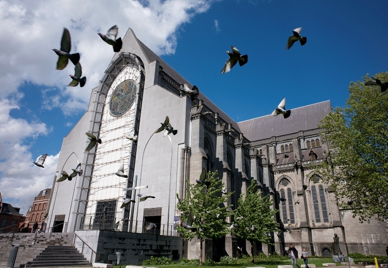 cathedralepigeons